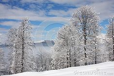 Photo about A nice winter lanscape with frost on the btanches of the trees and a blue cloudy sky. Image of winter, frosty, frost - 49384571 Winter Images, Winter Scenery, Frost, Trees, Sky, Stock Photos, Nice, Photography, Outdoor