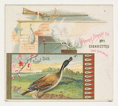 Pintail Duck, from the Game Birds series (N40) for Allen & Ginter Cigarettes
