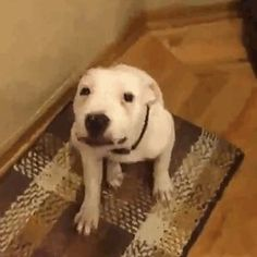 This Dog Who Smiles On Command Was Made To Be On Camera - http://www.funny-animal-pictures.org/this-dog-who-smiles-on-command-was-made-to-be-on-camera/