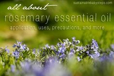 50+ uses for Rosemary Essential Oil from healthy hair to respiratory support and more, via SustainableBabySteps.com