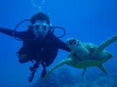 scuba divers - Tìm với Google
