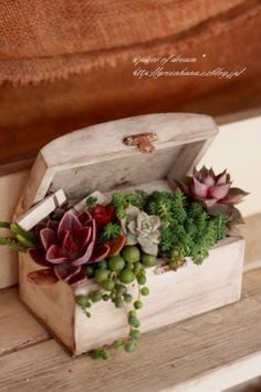 little wooden box with succulent plants.