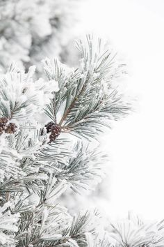 20 new Ideas for christmas tree photography nature forests Winter Background, Christmas Background, Christmas Wallpaper, Winter Szenen, Winter Christmas, Winter Trees, Winter Months, Christmas Christmas, Christmas Cookies