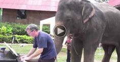 When This Elephant Heard Music, He Walked Over And Did Something That Surprised Us All.  http://animalbuzzer.com/when-this-elephant-heard-music-he-walked-over-and-did-something-that-surprised-us-all/