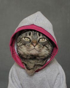 Moletom cinza e rosa - Cansei de ser Gato