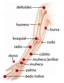 Cantidad de puntos de presión en el cuerpo humano
