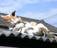 Amore miaoooow........))))))