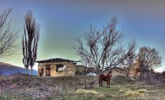 Horses pose , Exohi Drama , Greece Macedonia, Greece, Landscapes, Drama, Poses, House Styles, Nature, Beautiful, Art