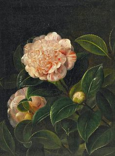 Unknown (Danish) Still Life with Camellia 19th century