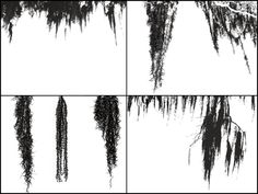 17 assorted PS 7 creepy tendrilly (is that a word? ) Spanish Moss brushes to compliment the first set As always Feel free to comment, it's how I know whether what I'm doing is worth it or...