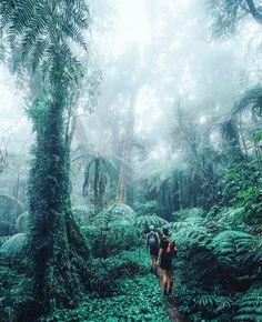 Jungle vibes  Regram from @jasoncharleshill #iledelareunion #lareunion #hurricanesunglasses #reunionisland #lunettesenbois #974 #nouveau #design #innovation #fashion #concept #local #gotoreunion #trend #tendance #designshop #photography by hurricane_sunglasses
