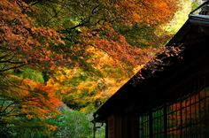 kamakura#鎌倉#英勝寺#紅葉
