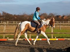 Making the Most of the Small Riding Ring