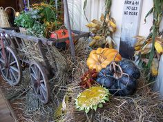 heirloom and kentucky field pumpkins can be found in my booth at Odana Antiques Madison WI $19-24 ea.