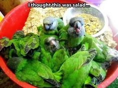 It took me a moment to realize that it wasn't salad. Hahaha good picture.