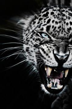 javysb:Very Angry by ©Paul Keates | JavysB | IG joybearus  Follow www.joselito28.tumblr.com