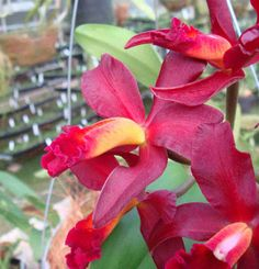 Costa Rica has some magnificent orchids