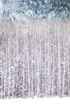 Winter Photography, Birch Trees in Snow, Nature Photography, Woodland Wall Decor, Large Wall Art by GeorgiannaLane on Etsy https://www.etsy.com/listing/115191191/winter-photography-birch-trees-in-snow
