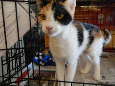 CHELSEA is avail. for adoption from @CUHumane #Urbana #Champaign #IL www.cuhumane.org PINNED 8/17/15 (CHAMPAIGN COUNTY HUMANE SOCIETY) Please click on the PET HARBOR link to see full BIO. Thanks.