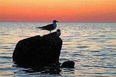 "[+2]  Menaul Fine Art ""Sunset Birds"" Limited Edition Artwork, 45 x 36"", Orange/Blue/Black"