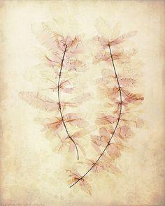 Antique Botanical Print Ghost Leaves par missquitecontrary sur Etsy, $30.00