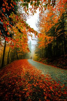 Fall. I'd love to take a drive through this forest...pinned by ♥…