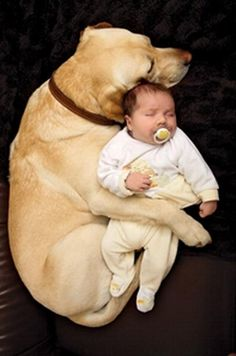 """Top 10 Pinterest Pins This Week:  """"It's warm and little and helpless...I'll keep it safe, poor hairless puppy""""."""