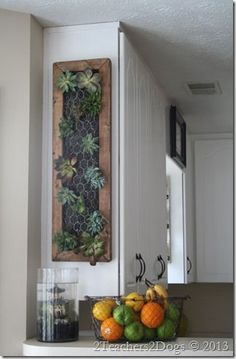 Hanging Succulent Garden ~ Our How-To