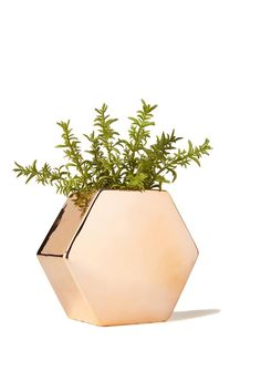 A fun way to bring the outdoors in, with our sleek shaped ceramic wall planter. Add some greenery and brighten up that space! <br> Dimensions: 15.5cm H x 17cm W. <br> Composition: 100% ceramic <br/>