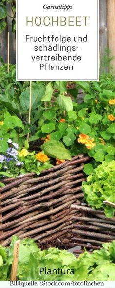 Welche Fruchtfolge Eignet Sich Am Besten Für Euer Hochbeet! Ein Hochbeet Im  Garten Bringt Viel