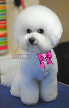Thank you for grooming with MDog Lucky!