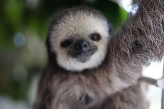 Meet The Woman Who Lives With 200 Sloths