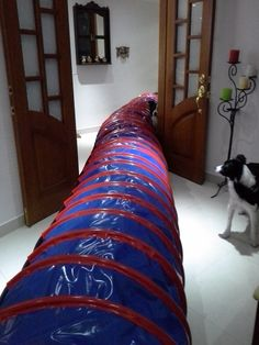 Túnel Azul de 6m de largo con aros Rojos
