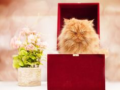 9 Cats Who Seriously Love Boxes - GoodHousekeeping.com