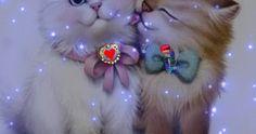 O coração não obedece nem    seu próprio dono, ele estaciona   onde ele se encanta.   Lúcia Helena Gifs, Anime, Drop Earrings, Wallpaper, Fluffy Kittens, Fashion Beauty, Frases, Paisajes, Everything
