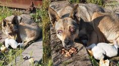 Mother dog poked in the eyes in Ukraine, her baby did not survive! Act Now! | YouSignAnimals.org