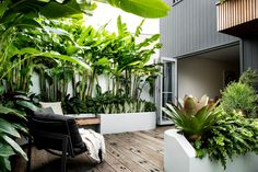 Balmain | Sticks and Stones Small Tropical Gardens, Tropical Garden Design, Coastal Gardens, Small Gardens, Back Garden Landscaping, Small Garden Landscape, City Landscape, Landscape Designs, Garden Path