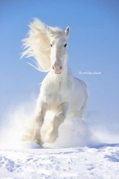 I love horses it looks like my baby sunny!! And yes she is a horse!!people Judge me every day by expressing my love for any animals really.but I stay strong and I keep clam: )