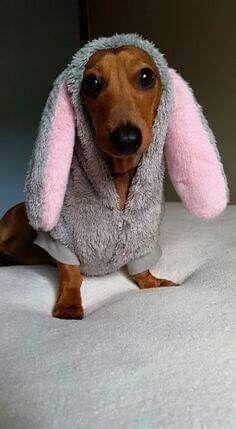 Happy ears