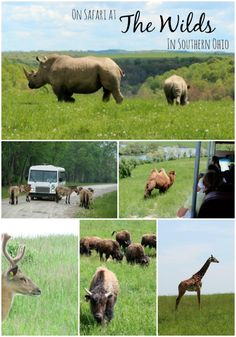 On Safari at The Wilds in Southern Ohio East of Columbus