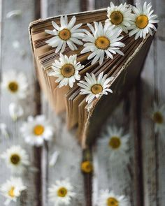Image uploaded by ackrus. Find images and videos about flowers and book on We Heart It - the app to get lost in what you love. Book Aesthetic, Flower Aesthetic, Aesthetic Pictures, Book Photography, Creative Photography, Photography Flowers, Book Flowers, Daisy Love, Foto Art
