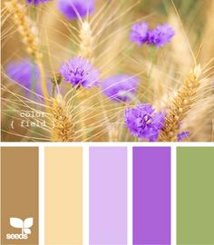 Color Field palette at Design Seeds. Maybe purple as an accent color?