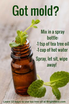 Tea tree oil can do anything from kill mold to help asthma! Learn 12 ways to use it at BrightNest Tea tree oil can do anything from kill mold to help asthma! Learn 12 ways to use it at BrightNest Homemade Cleaning Products, Household Cleaning Tips, Cleaning Recipes, House Cleaning Tips, Natural Cleaning Products, Cleaning Hacks, Household Cleaners, Cleaning Solutions, Cleaning Mold