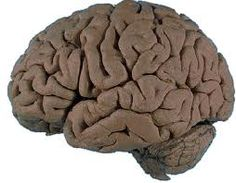 12 Findings on Mind, Brain & Education and many other articles about the brain and learning.  Great resource!