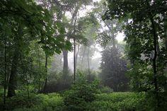 thicor:    leafes:    hvllucinvtion:    paleception:    plants n positvity   mother natures blog  cute lil plants  nature / foggy