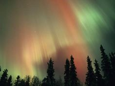Photographic Print: Aurora Borealis, Fairbanks Area Poster by Kevin Schafer : 24x18in