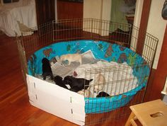 20 Comfy And Classy Whelping Box Ideas Pets Whelping Box Puppy Box Dog Whelping Box