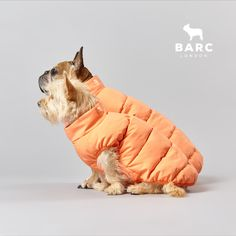 When you just want to match with your bestie. Shop our dog puffers on site now in Coral and Cream to keep your dog warm this winter #barclondon #barcdogs #barcfamily #dogjackets Dog Clothing, Dog Jacket, Dog Coats, Four Legged, Dog Design, Puppets, Besties, Coral, Range