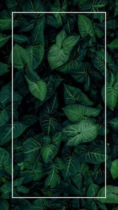 68 ideas for nature backgrounds iphone trees green Nature Iphone Wallpaper, Plant Wallpaper, Framed Wallpaper, Tumblr Wallpaper, Aesthetic Iphone Wallpaper, Flower Wallpaper, Screen Wallpaper, Phone Backgrounds, Wallpaper Backgrounds