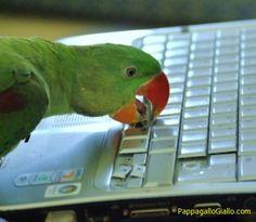Non lasciate soli i vostri animali domestici (24 foto)  - http://pappagallogiallo.com/non-lasciate-soli-i-vostri-animali-domestici-24-foto-07/